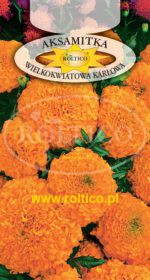 Aksamitka wzniesiona karłowa - Pomarańczowa