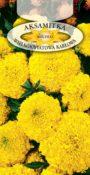 Aksamitka wzniesiona karłowa - Żółta