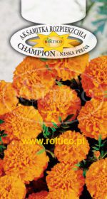Aksamitka rozpierzchła Champion - Pomarańczowa