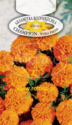 Aksamitka rozpierzchła Champion – Pomarańczowa