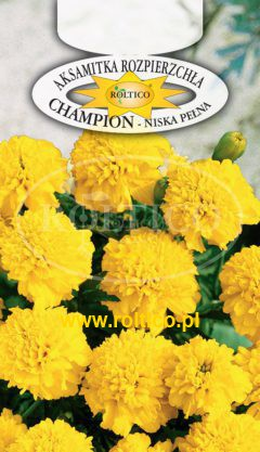 Aksamitka rozpierzchła Champion – Żółta
