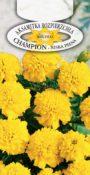 Aksamitka rozpierzchła Champion - Żółta