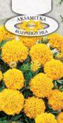 Aksamitka rozpierzchła - Żółta