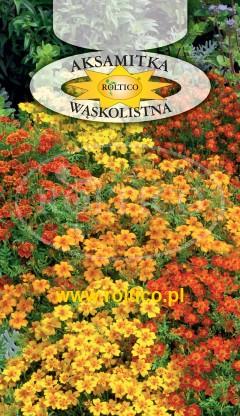 Aksamitka wąskolistna - Mieszanka