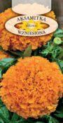 Aksamitka wzniesiona - Pomarańczowa