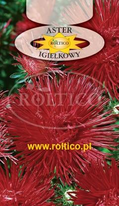 Aster igiełkowy - Czerwony
