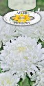 Aster peoniowy - Biały
