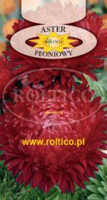 Aster peoniowy - Czerwony