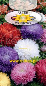 Aster peoniowy - Mieszanka