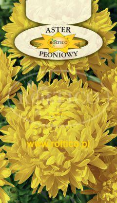 Aster peoniowy – Żółty