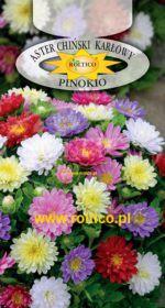 aster pinokio - mieszanka