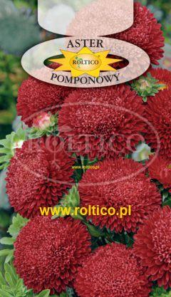 Aster pomponowy – Czerwony