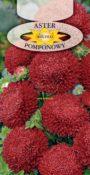 Aster pomponowy - Czerwony