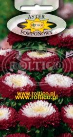 Aster pomponowy dwubarwny - Czerwony z białym środkiem