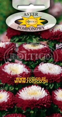 Aster pomponowy dwubarwny – Czerwony z białym środkiem