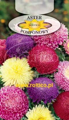 Aster pomponowy - Mieszanka