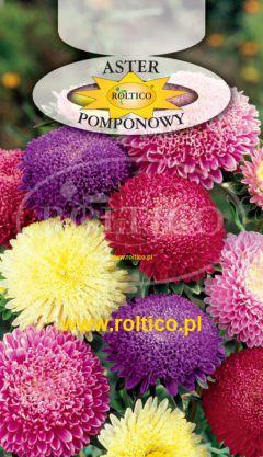 Aster pomponowy – Mieszanka