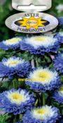 Aster pomponowy dwubarwny - Niebieski z białym środkiem