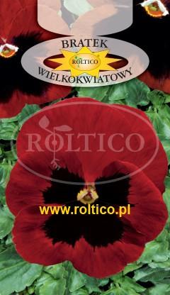 Bratek ogrodowy - Czerwony z plamą /Alpenglow/
