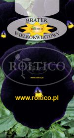 Bratek ogrodowy - Granat /Bergwacht/