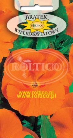 Bratek ogrodowy - Pomarańczowy