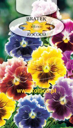 Bratek ogrodowy – Rococo – mieszanka