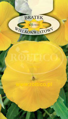Bratek ogrodowy – Żółty