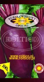 Burak ćwikłowy Opolski (100 gram ! ! !)
