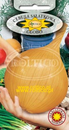 Cebula jadalna Globo