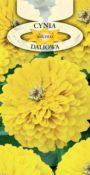Cynia wytworna daliowa - Żółta