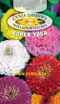 Cynia o dużych kwiatach – Mieszanka (Super Yoga)