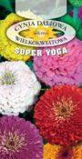 Cynia o dużych kwiatach - Mieszanka (Super Yoga)
