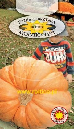 Dynia olbrzymia Atlantic Giant