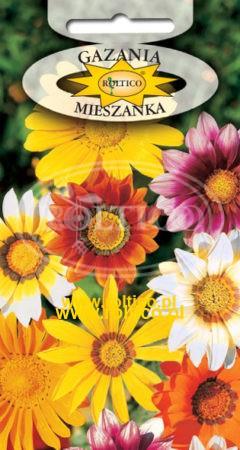 Gazania - Mieszanka