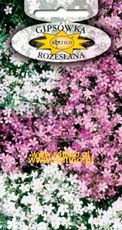 Gipsówka rozesłana - Biało-różowa