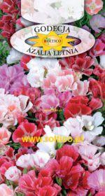 Godecja, Azalia letnia - Mieszanka