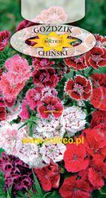 Goździk chiński - Mieszanka