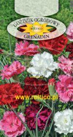 Goździk ogrod. Grenadin - Mieszanka