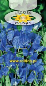 Groszek pachnący - Niebieski