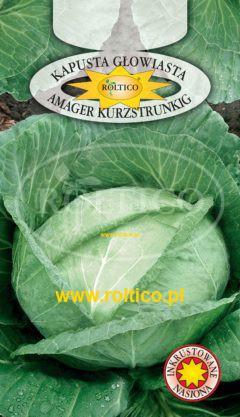 Kapusta głowiasta biała Amager Kurzstrunkig