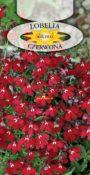 Lobelia niska - Czerwona