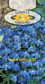 Lobelia niska - Niebieska