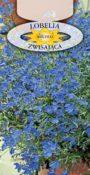 Lobelia zwisająca - Niebieska