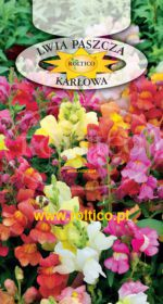 Lwia paszcza - Karłowa - mieszanka