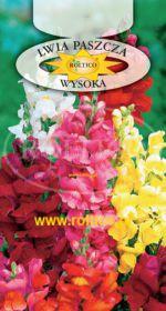 Lwia paszcza - Wysoka - mieszanka