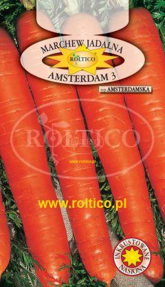 Marchew Amsterdam 3 – Amsterdamska