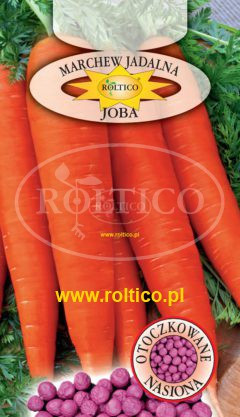 Marchew Joba