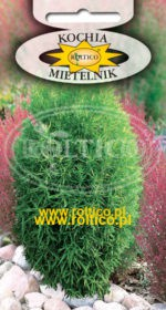 Mietelnik - Cyprus letni