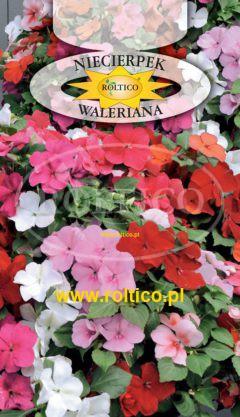Niecierpek waleriana – Mieszanka