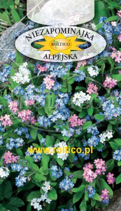 Niezapominajka alpejska - Mieszanka